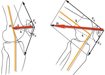 Força de reação na articulação patelofemoral - Instituto Fortius