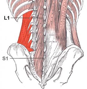Quadrado lombar