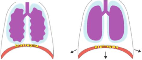 Descida do diafragma