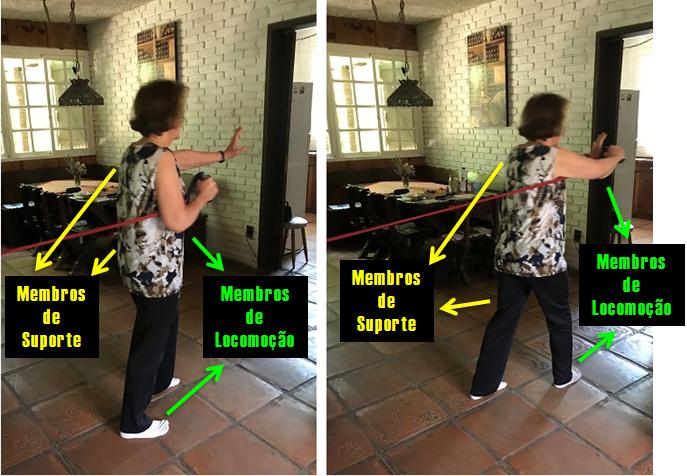 Padrão de movimento ipsilateral - com ênfase nos membros de locomoção.