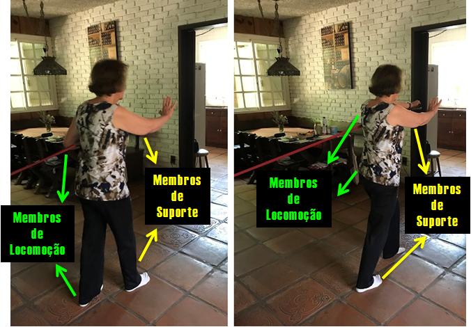 Padrão ipsilateral de movimento - com ênfase nos membros de suporte.