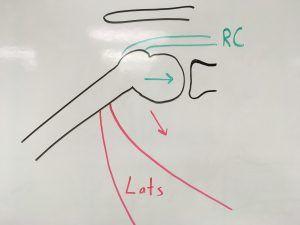 Diagrama do par de forças latíssimo do dorso x supra-espinal resultando na no rolamento e deslizamento da cabeça do úmero para baixo.