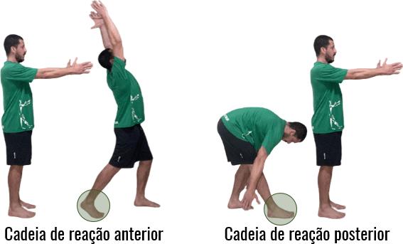 Zonas de transformação das cadeias de reação do plano sagital.